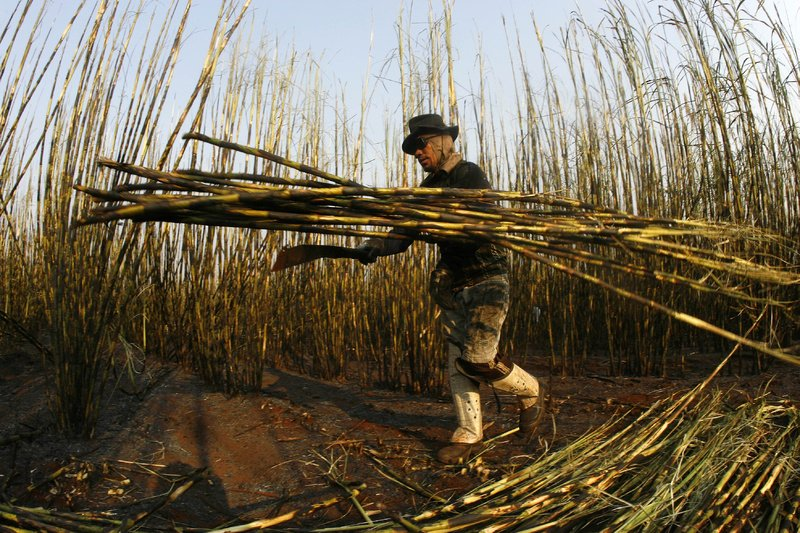 "A sugar cane cutter works in Batatais, Brazil. Employers on the nation's ""dirty list"" can't get credit from banks."
