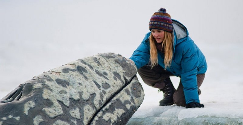 """Drew Barrymore plays a calculating Greenpeace activist in """"Big Miracle."""""""