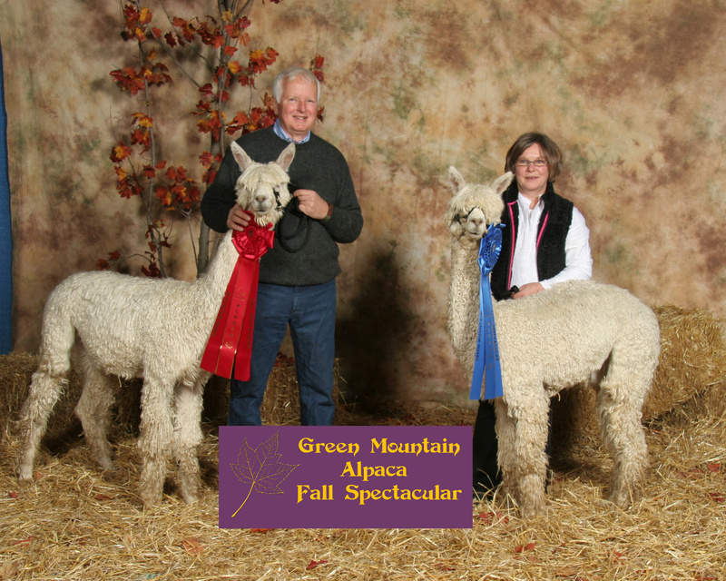 North Yarmouth's SuriPaco Alpaca was the only Maine recipient of a $30,000 USDA grant this year. The farm raises alpacas, which are shown here at a competition in Burlington, Vt.