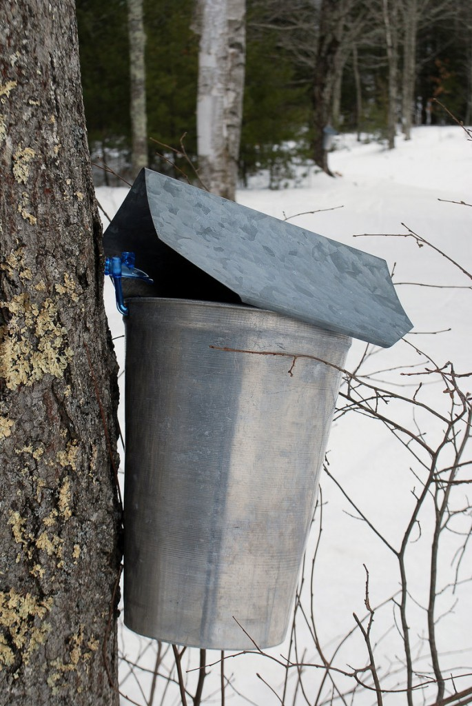 March is a time for cross-country skiing and maple syrup at Harris Farm, and thanks to a snowstorm on March 1, there was a reason to visit the farm other than to see buckets collecting sap from maple trees.