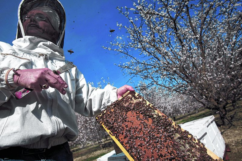 Gordon Wardell tends bee hives for Paramount Farming Co. in Lost Hills, Calif. Because of the bees' importance in pollinating plants, the company employs Wardell as a staff entomologist to care for them.