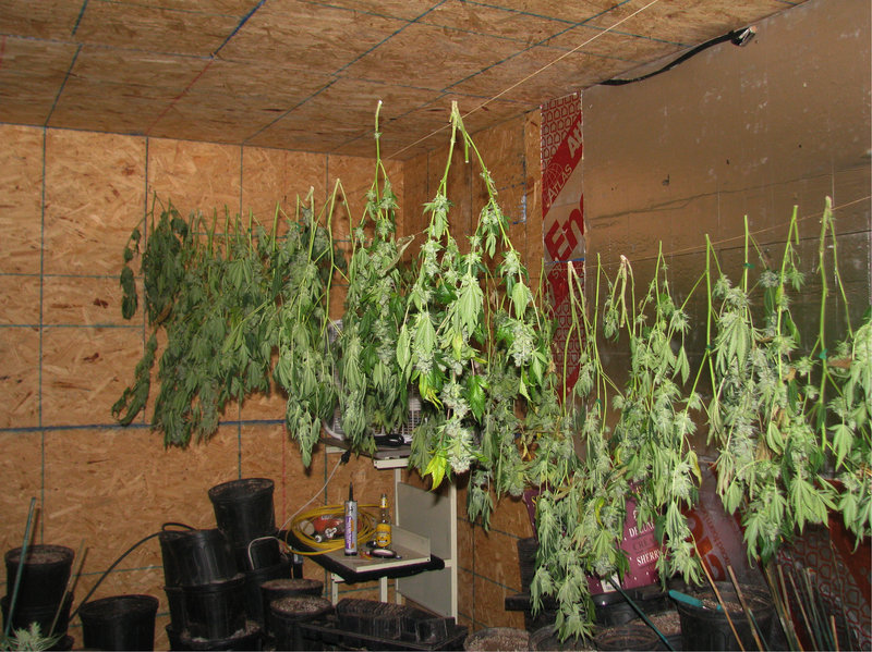 "Authorities who raided a warehouse in Waterboro said it was set up for ""continuous cultivation,"" with 800 plants in various stages of growth throughout the building."