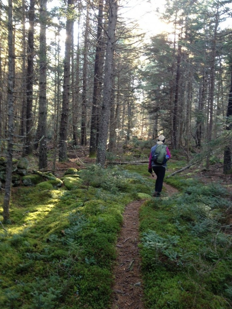 The Crook Trail at Crooked Farm Preserve includes both uphill sections and flatter sections, with much of the trail lined by spruce and fir trees.