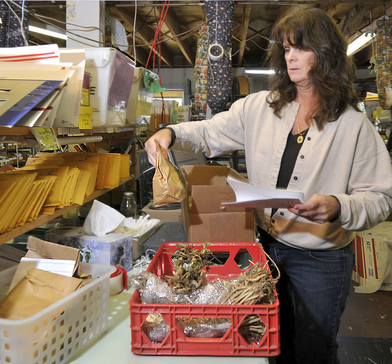 Nordica Danieli packs asparagus, seed potatoes and strawberry plants for a shipment to Wisconsin.