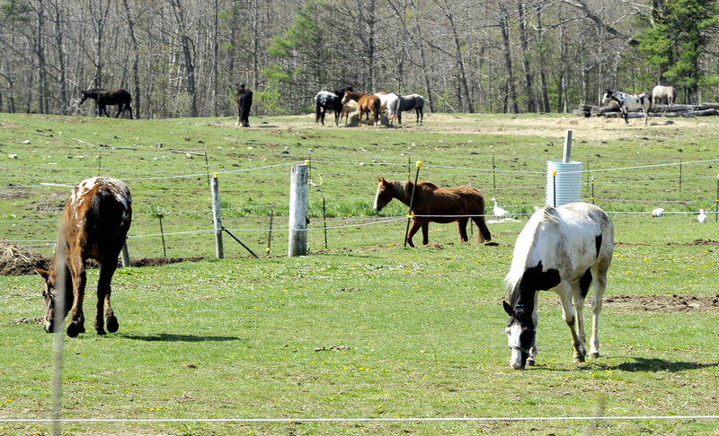 Horses graze at Whistlin' Willows Farm on Saturday. Some of the farm's horses recovered from the outbreak's effects, while another 40 to 45 animals never became sick, officials said.