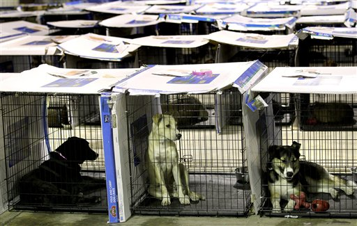 FILE-In this June 14, 2011 file photo, rescued dogs sit in their kennels at a shelter in Joplin, Mo. after surviving an EF-5 tornado that ripped though the city three weeks earlier. Shelter and care for more than 1,300 pets left homeless by the twister accounted for $371,857 of the $500 million in taxpayer assistance provided after the costliest tornado on record. (AP Photo/Charlie Riedel, File)