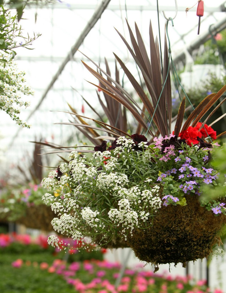 It can be hard to keep plants in hanging baskets and pots thriving, as the containers don't hold much water and hanging in the air causes them to dry out more quickly. But with good planning, and by adopting a bigger-is-better philosophy when choosing basket size, you can have success.