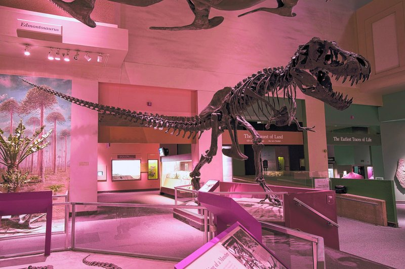 The Smithsonian's Dinosaur Hall has remained unchanged for more than 30 years. The current exhibit gallery began when the museum opened in 1910.