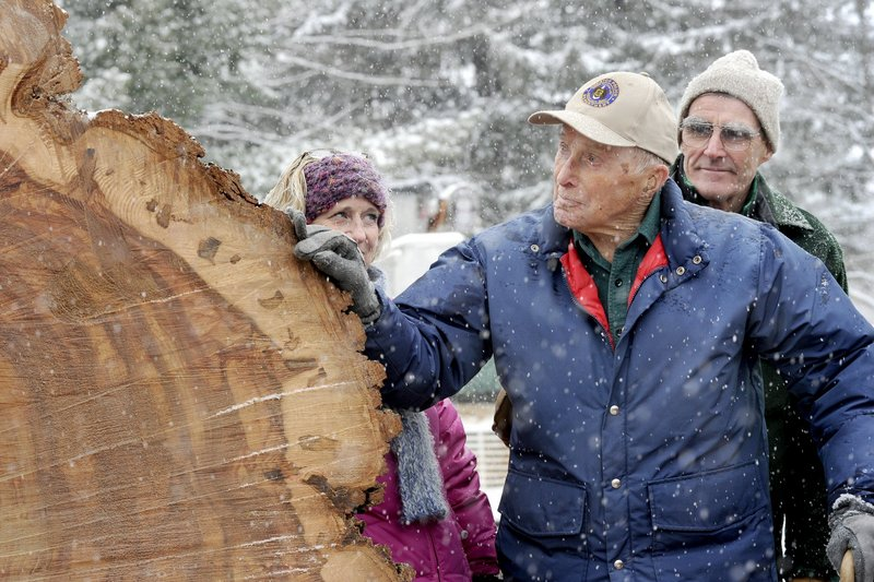 Frank Knight saw Herbie, the 217-year-old Yarmouth tree, taken down in January 2010.