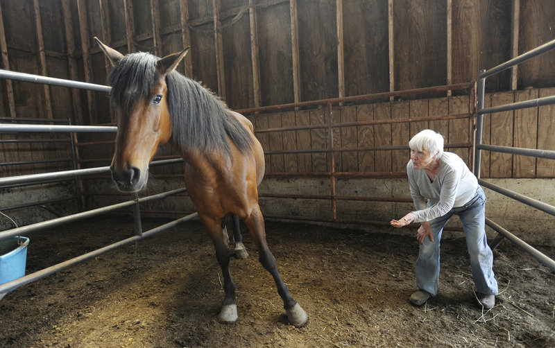 Mona Jerome, director of Ever After Mustang Rescue in Biddeford, works with Cheyenne on the mustang's people skills before visitors arrived on Sunday.