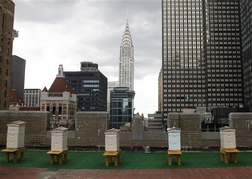 Honey bee hives sit on the 20th-floor roof of the famed Waldorf Astoria hotel in New York.