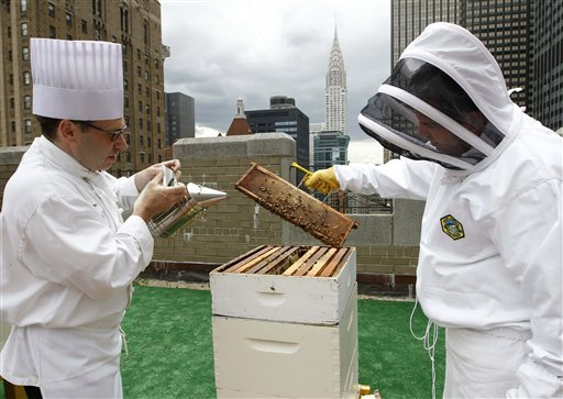 Sous chef Josh Bierman, left, and culinary director David Garcelon inspect honey bees from hives on the 20th floor roof of the Waldorf Astoria hotel in New York on Tuesday.