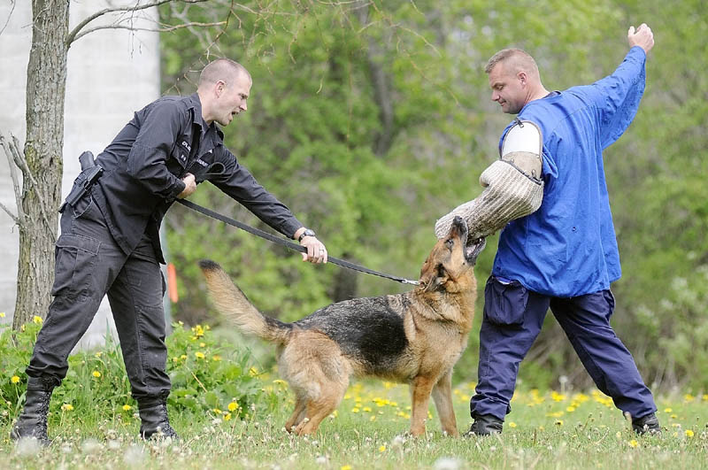 GO GET HIM: Kennebec County Sheriff's Cpl. G.J. Neagle, left, holds onto Gib as he nips Maine State Trooper Stephen Hills during training in Vassalboro last month.