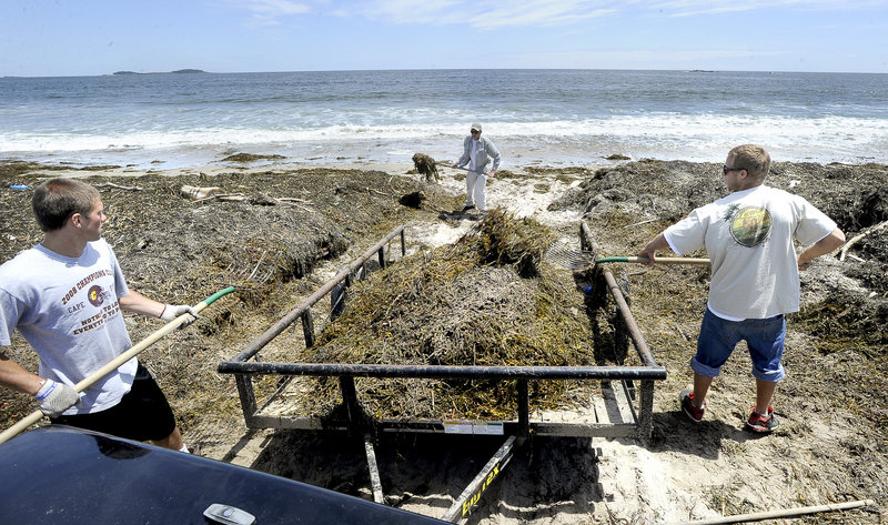 State park lifeguards Joey Doane and Kaycee Stevens load a trailer while maintenance supervisor Zach Bergman scoops up more rockweed as they work to clean up Scarborough Beach. Other parts of the beach have been cleared and are available for visitors.