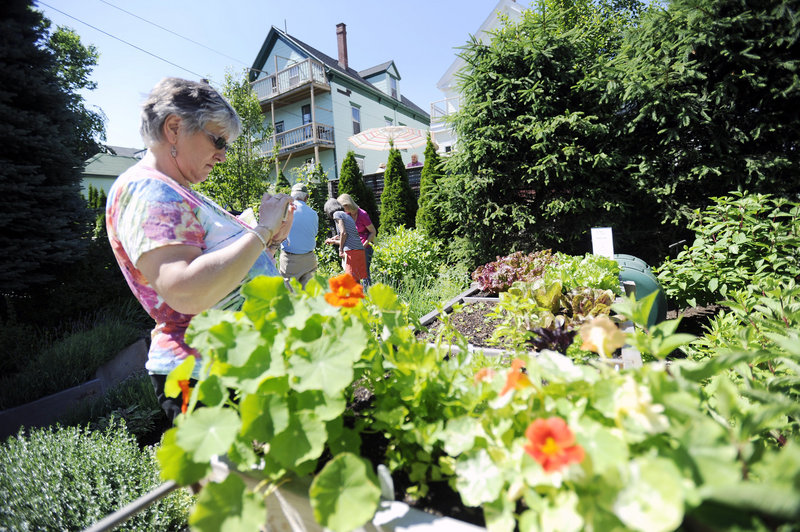 Sharon LaFrancis of Windsor, Conn., photographs a salad table garden. Gardeners said opening up their yards helps raise money for a good cause, and they get gardening tips from their visitors.