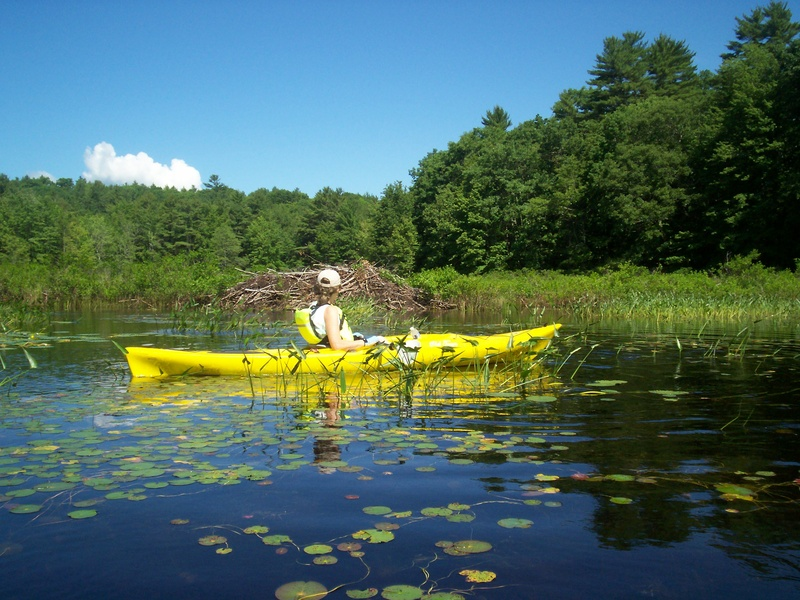 Dyer Long Pond in Jefferson is a great place for kayaking in placid conditions, especially early in the day.
