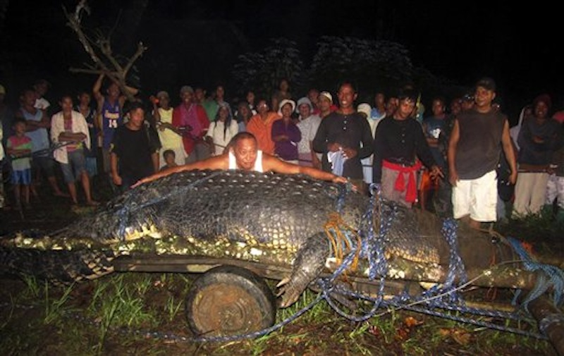 In this Sunday, Sept. 4, 2011 file photo, Bunawan Mayor Edwin Cox Elorde pretends to measure a huge crocodile which was captured by residents and crocodile farm staff along a creek in Bunawan in Bunawan town in Agusan del Sur province, southern Philippines. Guinness World Records has declared Sunday, July 1, 2012 that the huge crocodile blamed for deadly attacks is the largest in captivity in the world. Guinness spokeswoman Anne-Lise Rouse says the saltwater crocodile nicknamed