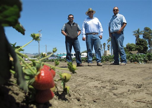 Rogelio Ponce Sr., center, and his two sons, Rogelio Ponce Jr., left, and Steven Ponce, pose for a photo at the family's ranch in Watsonville, Calif., where the Ponces grow nearly 200 acres of strawberries. Ponce Sr., whose father migrated from Mexico and grew berries as a sharecropper, sold the family's home to start his own strawberry business some 20 years ago.