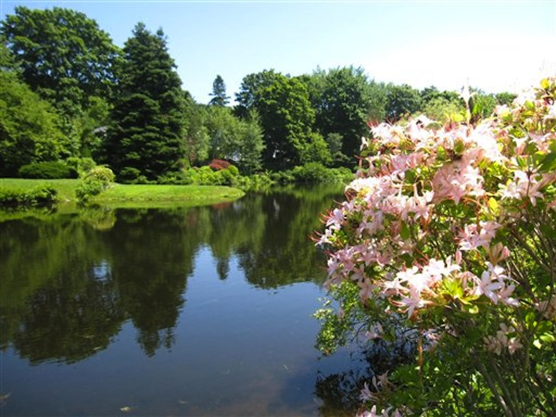 This July 12, 2012 photo shows the pond at the Asticou Azalea Garden in Northeast Harbor, Maine. Asticou includes plants once owned by the renowned landscape designer Beatrix Farrand, who also designed the nearby Abby Aldrich Rockefeller garden, a private garden open to the public just a few days a year. (AP Photo/Beth J. Harpaz)