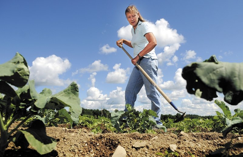 Diane Campbell hoes in her garden Tuesday at Wolf Creek Farm in Sidney. Campbell says she has had to replant some of her produce three times this year due to weather conditions that have impeded growth.