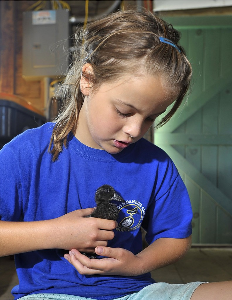 Cameron Jury, 11, from Scarborough, carefully holds a baby duck during the farm camp at Broadturn Farm in Scarborough.