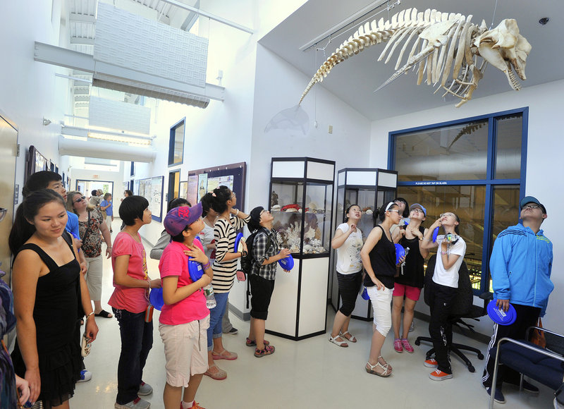 A group of students from China examines the skeleton of an adult pygmy whale suspended from the ceiling of the University of New England's Marine Animal Rehabilitation Center in Biddeford during their tour this week. Kennebunk High School Principal Susan Cressey said she hopes the school is able to host international students as early as the fall of 2013.