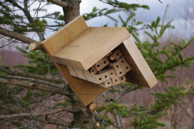 Organic blueberry grower Doug Van Horn is using varied nesting box designs for the small wild pollinators.