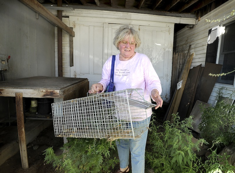 Dr. Eleanor Saboski removes an empty trap alongside a outbuilding at the Wormwoods Restaurant at Camp Ellis in Saco on Wednesday, August 29, 2012. The trap was used to catch and release over 60 feral cats over a two-year period at Camp Ellis.