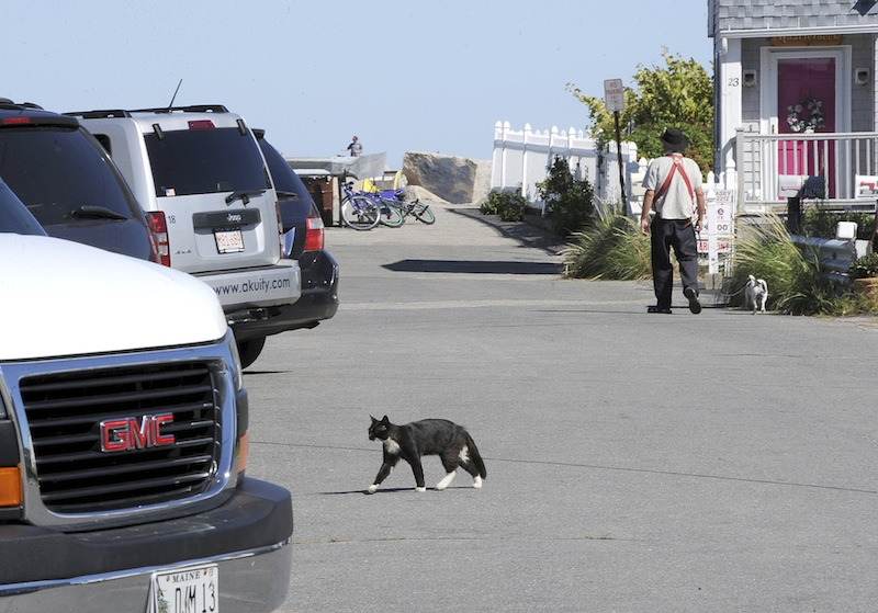 A cat crosses the street in front of Wormwoods Restaurant at Camp Ellis in Saco on Wednesday, August 29, 2012.