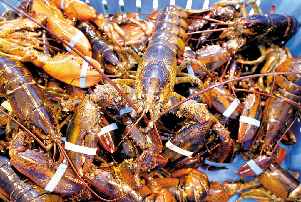 Freshly caught lobsters rest in a crate at Harbor Fish Market in Portland.