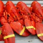This August 5, 2005 file photo shows lobsters at The Maine Lobster Festival in Rockland. The state's Lobster Advisory Council voted unanimously Thursday to move forward with a $3 million plan to market Maine lobster in an effort to boost prices, which are at their lowest level in 30 years.
