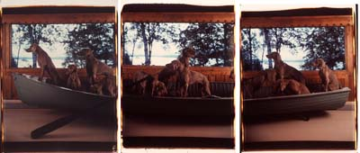 "The large-scale Polaroid ""Crossing"" from William Wegman's ""Hello Nature"" at the Bowdoin College Museum of Art."