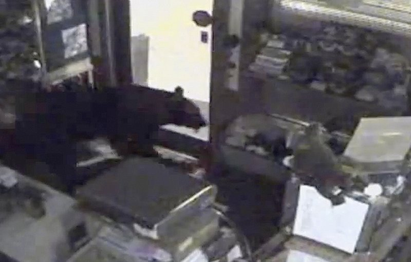 This image taken from surveillance video shows a black bear leaving the Rocky Mountain Chocolate Factory store in Estes Park, Colo., on July 25.