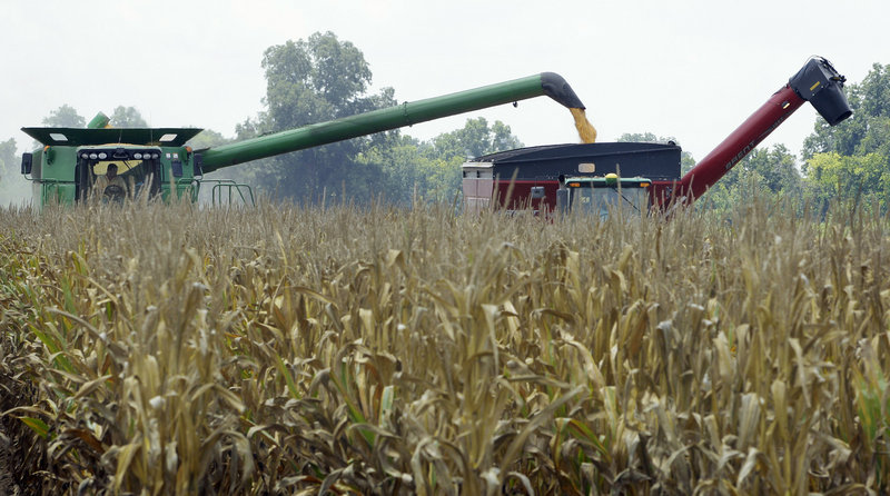 Harvested corn is dumped from a combine into a hopper near Altheimer, Ark. Farmers credit advances in seed technology that have produced hardier, more drought-tolerant corn for any harvest at all, following weeks of 105-degree temperature.
