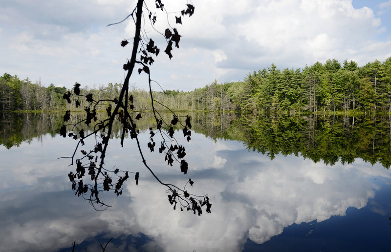 Chaffin Pond in Windham and about 123 acres surrounding it will become a park if the Town Council decides to move forward with a proposal that would cost $2.2 million. The plan includes a fishing dock, a picnic pavilion, trail improvements and playing fields.