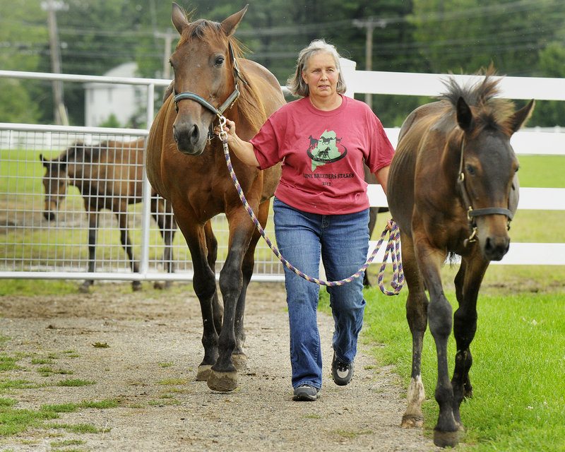 "Lynn-Marie Plouffe leads some of her horses into the barns at Dupuis Farm in Saco on Thursday. ""We're always concerned,"" she said, but added that the farm maintains a regular vaccination program that includes shots and boosters for all of its horses."