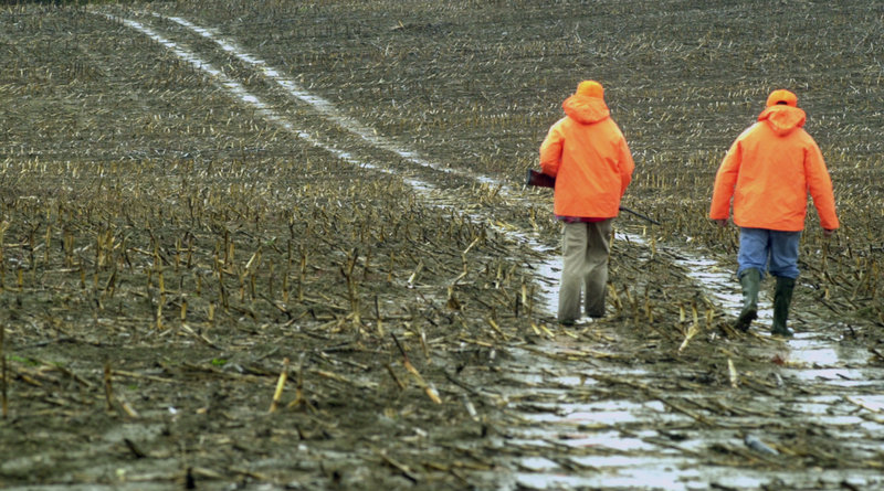 Deer hunters walk through a cornfield in Freedom in this photo from 10 years ago, when the numbers of hunters and deer were much higher.