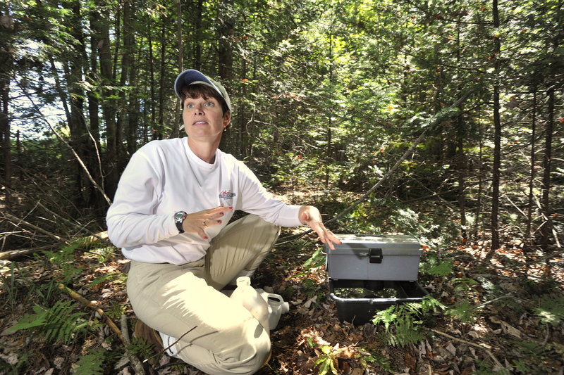 "Sherrie Juris, a biologist with Atlantic Pest Solutions, explains how a gravid trap that she had just set up lures egg-bearing female mosquitoes with ""stinky water,"" then traps them."