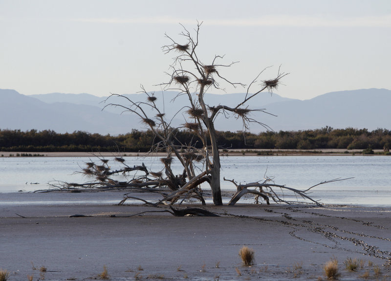 Southern California's Salton Sea was the source of a stench so strong that residents were complaining from 150 miles away.
