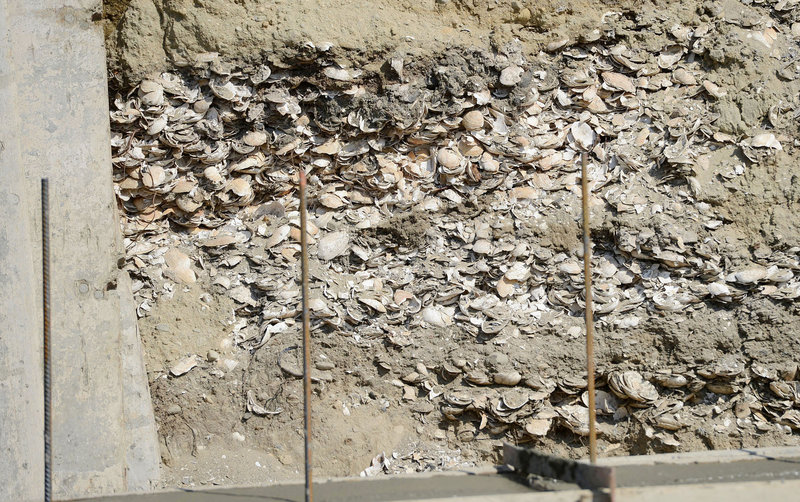 Layers of oyster and clam shells at this Hammond Street construction site in Portland led some to speculate that a midden – an ancient garbage pit – had been uncovered. Further examination by an archeologist with the Maine Historical Preservation Commission suggests the shells and marina clay had been transported to the area as fill to allow development.