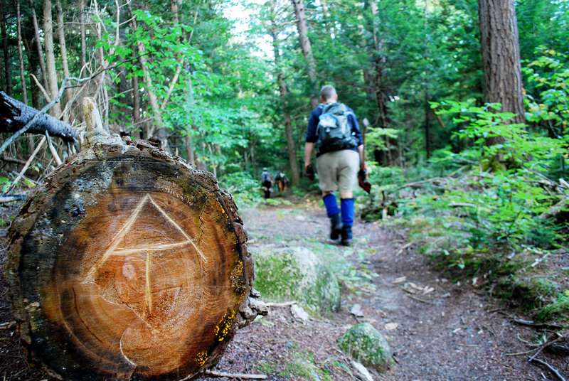 Volunteers perform their duties on the L.L. Bean section of the Appalachian Trail. The L.L. Bean crew has gathered together twice a year for 32 years to maintain a section of the trail in the 100 Mile Wilderness. The AT symbol is etched into the bottom of a fallen tree.