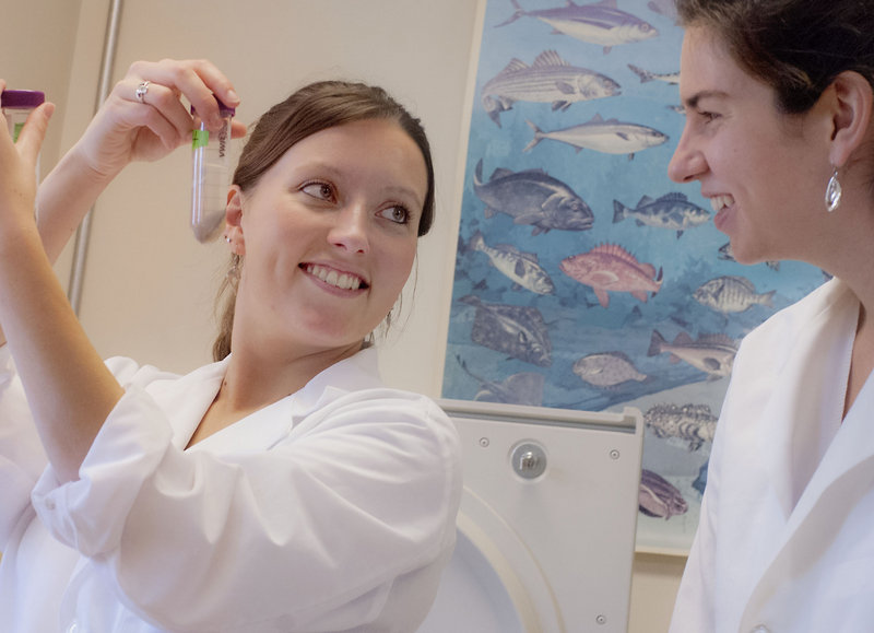 UMaine graduate student Brianna Hughes, left, and undergraduate student Katie Crosby use chemical techniques to extract collagen from abalone tissue. At a time when enrollment at UMaine is down overall, a record number of students are enrolling in the university's Department of Food Science and Human Nutrition.