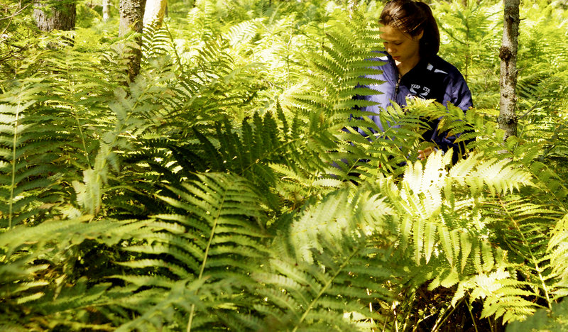 Tom and Svetlana Bell's 16-year-old daughter, Ihila Lesnikova, walks through ferns during a hike with her father in the forest in the Bikin River basin.