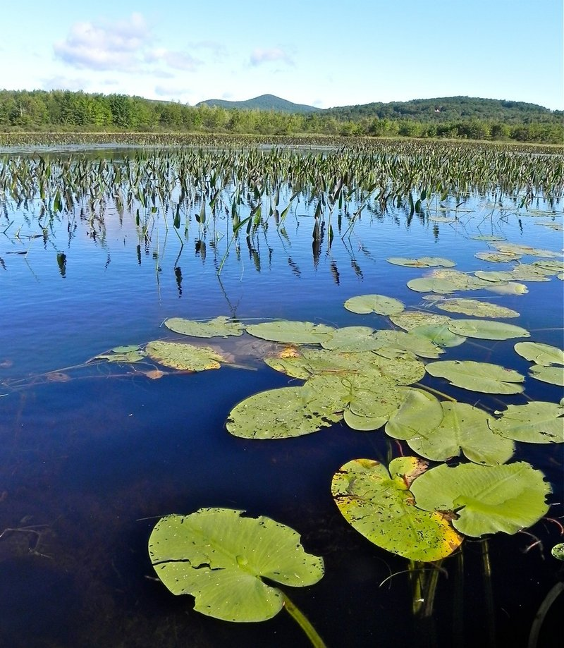 This marsh is on the north end of Wilson Pond in Wilton. A leisurely canoe trip around Wilson Pond takes about four hours and offers a variety of scenic views.