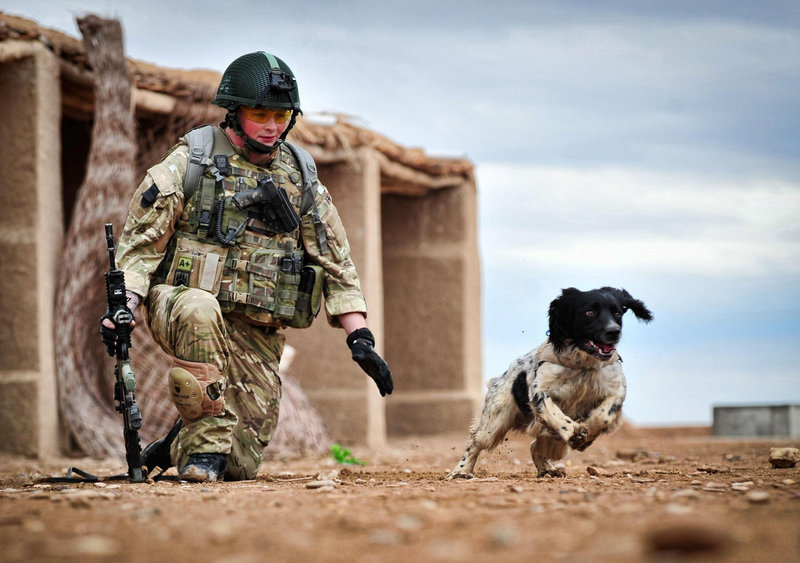 Lance Cpl. Liam Tasker and his bomb-sniffing Springer spaniel mix Theo, in a Ministry of Defence undated photo.