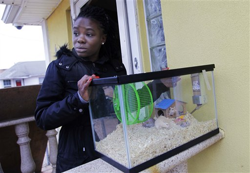 In this Nov. 1, 2012, photo, Irmine Celestine stands on the stoop of her nephew's home, with his gerbils, in the Midland Beach section of Staten Island, New York, Thursday, Nov. 1, 2012. After his home was deemed unsafe by inspectors, Celestine agreed to take the gerbils until her nephew could find a more permanent place to stay. Superstorm Sandy drove New York and New Jersey residents from their homes, destroyed belongings and forced them to find shelter for themselves _ and for their pets, said owners, who recounted tales of a dog swimming through flooded streets and extra food left behind for a tarantula no one was willing to take in. (AP Photo/Seth Wenig)