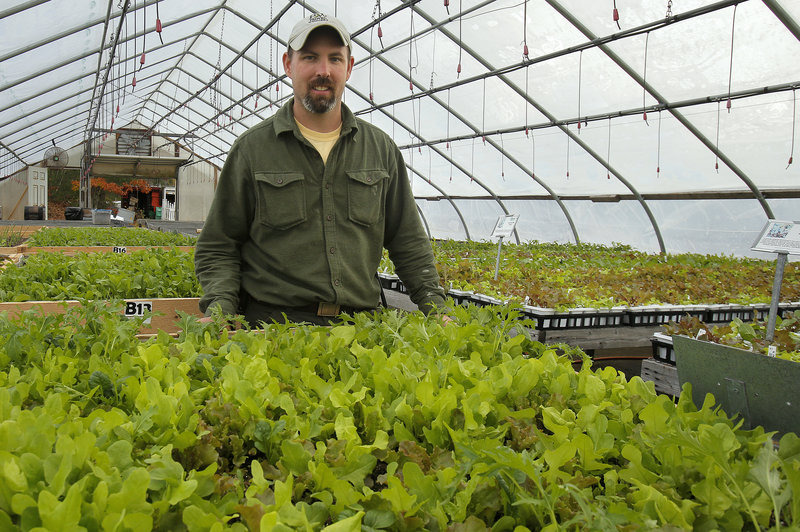 "Joe Viscano has a greenhouse full of greens that he will sell in his store, at the farmers market and to restaurants. ""It's kind of a science project,"" he said. ""It seemed like there was a demand for something like this."""