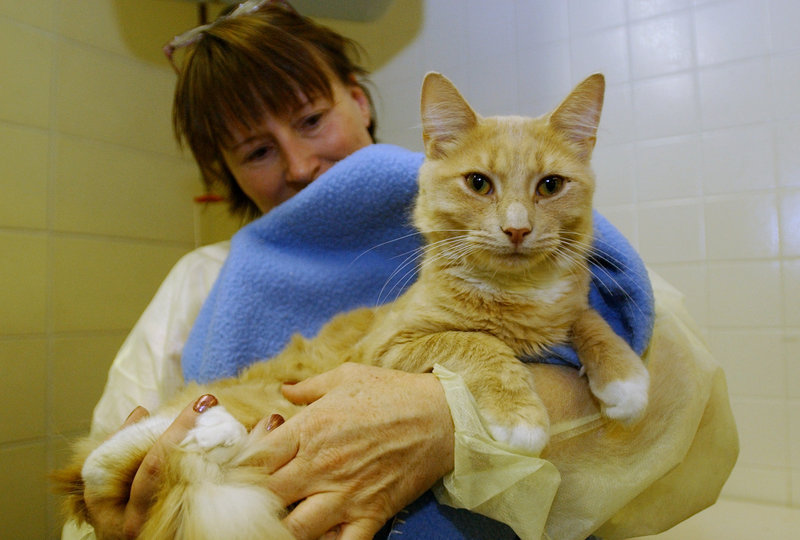 A shelter technician holds a cat at the Animal Refuge League in Westbrook in a 2005 file photo. The Animal Refuge League takes in 4,000 animals a year, and they get lots of attention and care from volunteers and staff – but each animal would like to have a home of its own with a loving owner, a shelter employee says.