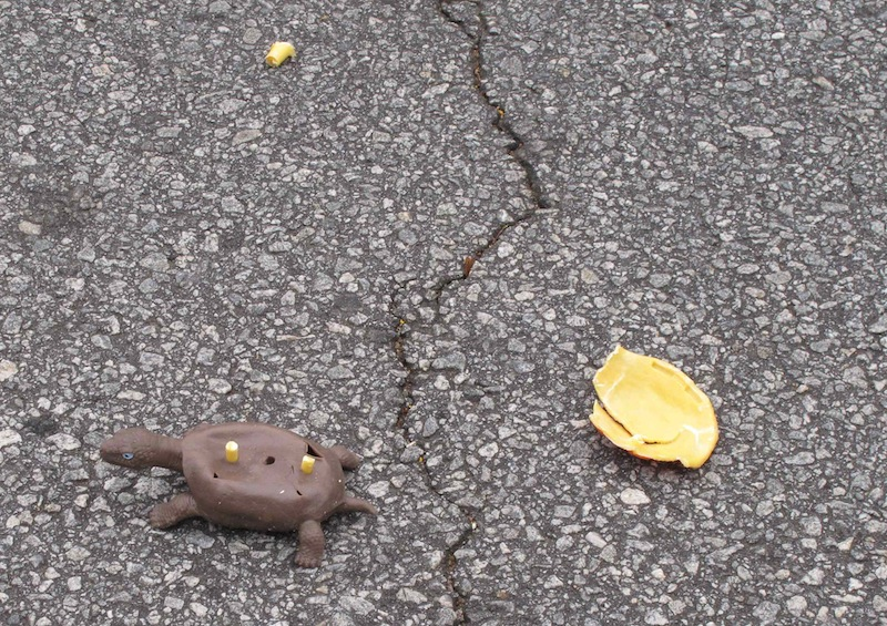 In this Dec. 12, 2012 photo, the shattered plastic shell of a fake turtle sits near the turtle's rubber body on a road near Clemson, S.C. Clemson University student Nathan Weaver is placing fake turtles in roads near campus to see how many drivers intentionally run over the animals. (AP Photo/Jeffrey Collins)