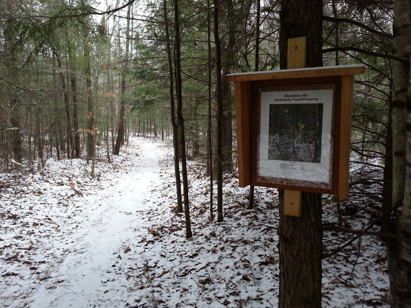 Geocaching can help families learn about new and interesting places to hike, like the Blackstrap Hill Community Forest/Preserve in Falmouth.